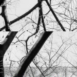 tree-1-a