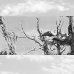 tree-2-a