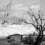 tree-3-a