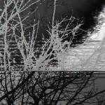 tree-4-a