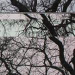 tree-5-a