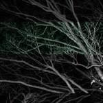 tree-7-a