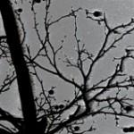 tree-8-b