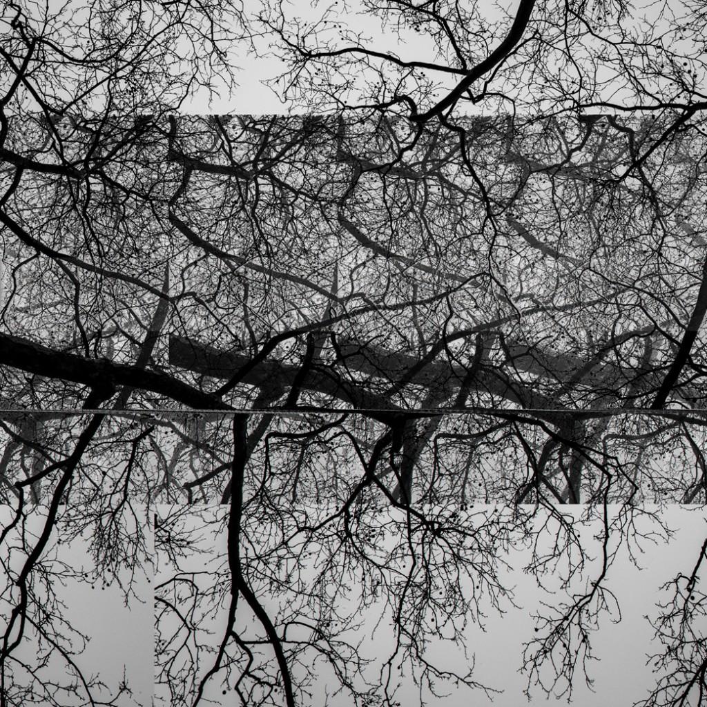 trees-9